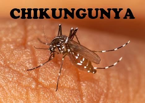 Chikungunya – Prevention & Treatment